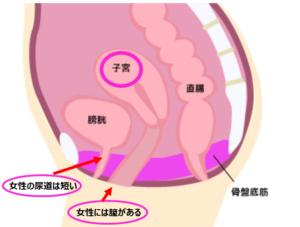女性骨盤内説明図