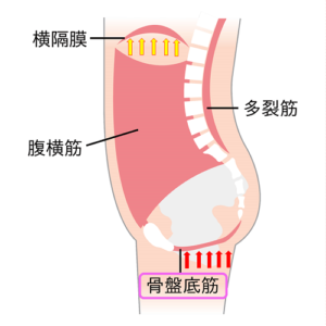 腹圧方向3